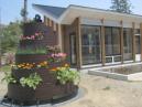 写真-6 ロハスの花壇
